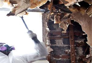 mold remediation in hazmat suit